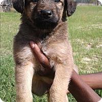 Adopt A Pet :: Elsa - Barnwell, SC
