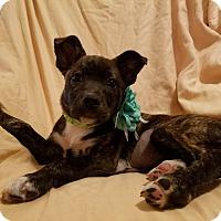 Adopt A Pet :: Jada (has been adopted) - Trenton, NJ