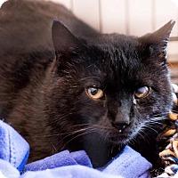 Adopt A Pet :: Phil - Naugatuck, CT