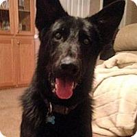Adopt A Pet :: Rackette - Pike Road, AL
