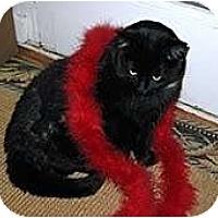 Adopt A Pet :: Gucci - Alexandria, VA