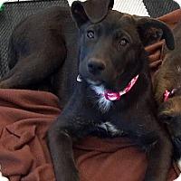 Adopt A Pet :: Mishca - Phoenix, AZ