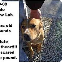 Adopt A Pet :: # 880-09 - RESCUED! - Zanesville, OH