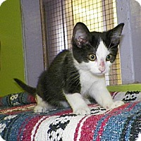 Adopt A Pet :: Sprout - Dover, OH