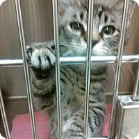Adopt A Pet :: McCoy 6 - Plainville, MA