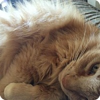 Adopt A Pet :: LAZLOW - Ridgewood, NY
