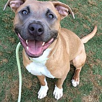 Adopt A Pet :: Mio - Dallas, GA