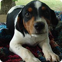 Adopt A Pet :: Jager - Plainfield, CT