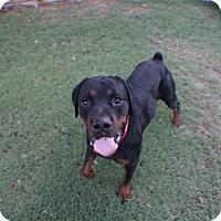 Adopt A Pet :: Yonkers - Gilbert, AZ