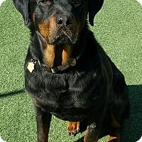 Adopt A Pet :: Buffalo - calimesa, CA