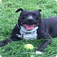 Adopt A Pet :: A422830 - San Antonio, TX