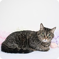 Adopt A Pet :: Romy - Chico, CA