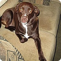 Adopt A Pet :: Belle - Hamilton, ON