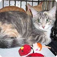 Adopt A Pet :: Lily - Frenchtown, NJ