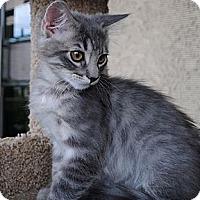 Adopt A Pet :: Finn - Palmdale, CA