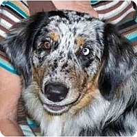 Adopt A Pet :: Ally - Orlando, FL