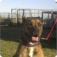 Adopt A Pet :: Jeremy - Sacramento, CA