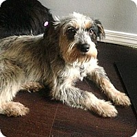 Adopt A Pet :: *Susie - PENDING - Westport, CT