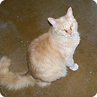 Adopt A Pet :: JoJo - Scottsdale, AZ