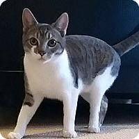 Adopt A Pet :: Amelia - Palmdale, CA