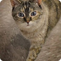 Adopt A Pet :: Nina - Byron Center, MI