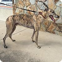 Adopt A Pet :: Davis - Tampa, FL