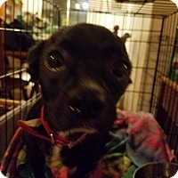 Adopt A Pet :: Kayla - Weatherford, TX