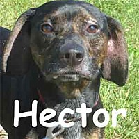 Adopt A Pet :: Hector - Warren, PA