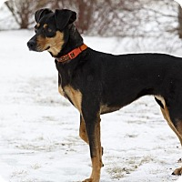 Adopt A Pet :: Carli - Ile-Perrot, QC