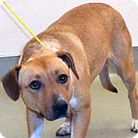 Adopt A Pet :: Bail - Wildomar, CA