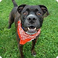 Adopt A Pet :: Diesel - Wilmington, DE