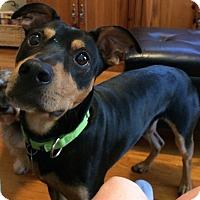 Adopt A Pet :: Harris - Houston, TX