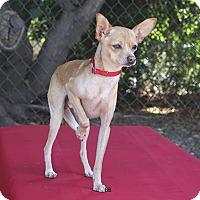 Adopt A Pet :: Banks - Santa Barbara, CA