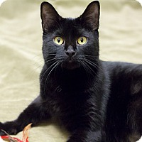Adopt A Pet :: Moira - Chicago, IL