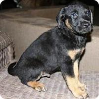 Adopt A Pet :: Lupin - Gilbert, AZ
