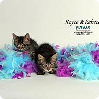 Adopt A Pet :: Royce - Belle Chasse, LA