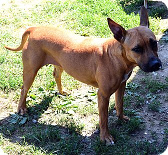 Shepherd (Unknown Type) Mix Dog for adoption in Elyria, Ohio - Kennel #5