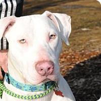 Hound (Unknown Type)/Catahoula Leopard Dog Mix Puppy for adoption in Spring Lake, New Jersey - Elliot