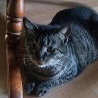 Adopt A Pet :: ABEDNEGO - Lawton, OK