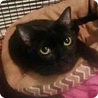 Adopt A Pet :: Tulip - Hartford, KY