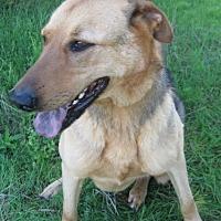 Adopt A Pet :: Rusty - Huntsville, AL