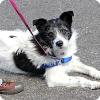 Adopt A Pet :: Doogie - Harrison, NY