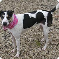 Adopt A Pet :: Dezy - Voorhees, NJ
