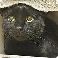 Adopt A Pet :: Rowan - Salisbury, MA