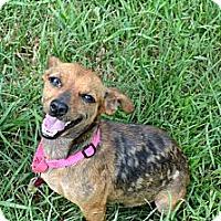 Adopt A Pet :: Bambi - Xenia, OH