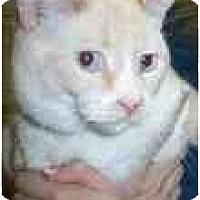 Adopt A Pet :: Ivory & Ebony - Arlington, VA