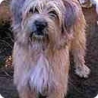 Adopt A Pet :: Dolly - dewey, AZ