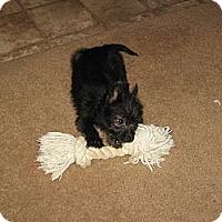 Adopt A Pet :: Easter - Goodyear, AZ