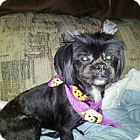Adopt A Pet :: Dolly - Leetonia, OH