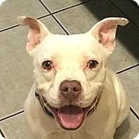 Adopt A Pet :: Ruz - Calgary, AB